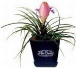 Custom Imprinted Bromeliad Plants