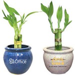 Custom Imprinted Lucky Bamboo Plants