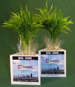 Luau Themed Promotional Items - Small Live Luau Plants