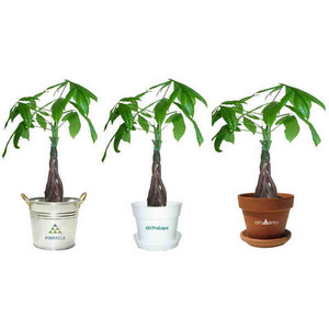 Custom Imprinted Tropical Plants